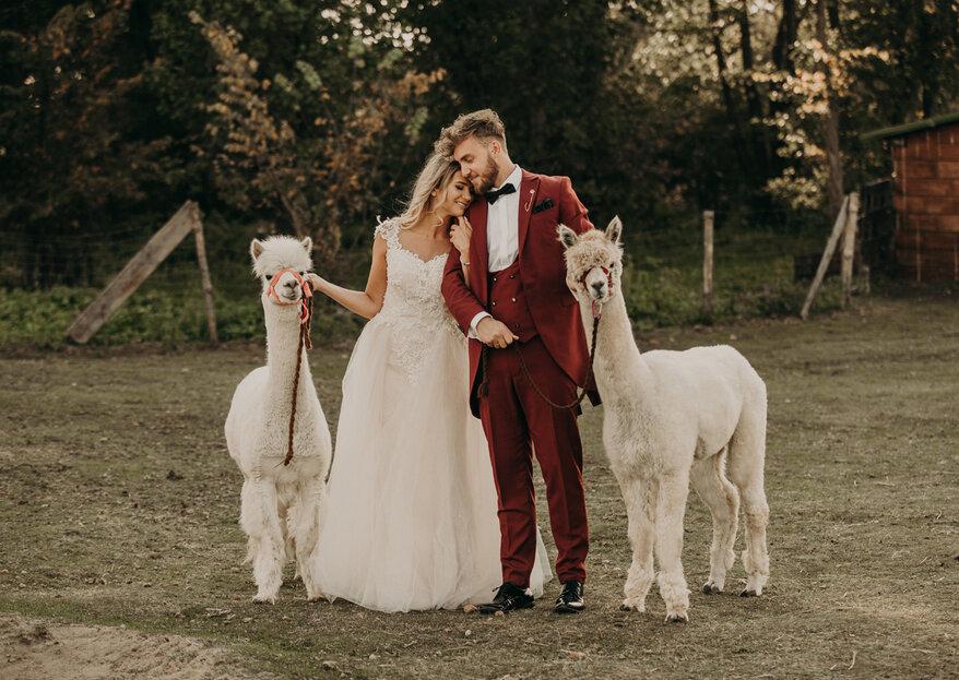 Plenerowa sesja ślubna z alpakami. Nie przegap tego widoku!